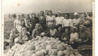 Брыгада паляводаў на ўборцы капусты. 1953 год.